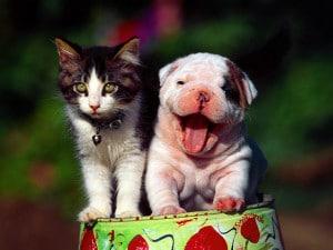 Cherry Hill veterinarian