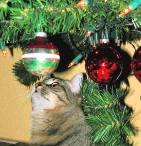 Purr-fect Holiday Tips