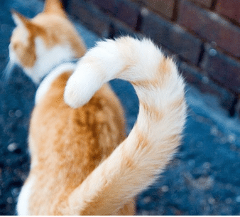 what age should you neuter a male cat