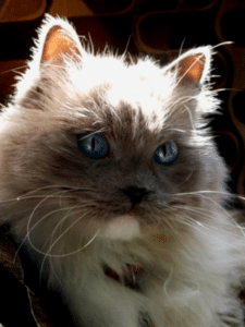 feline-facts