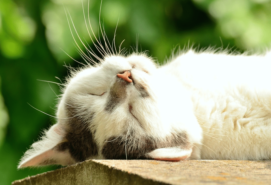 Cherry Hill Cat Veterinarian Spring