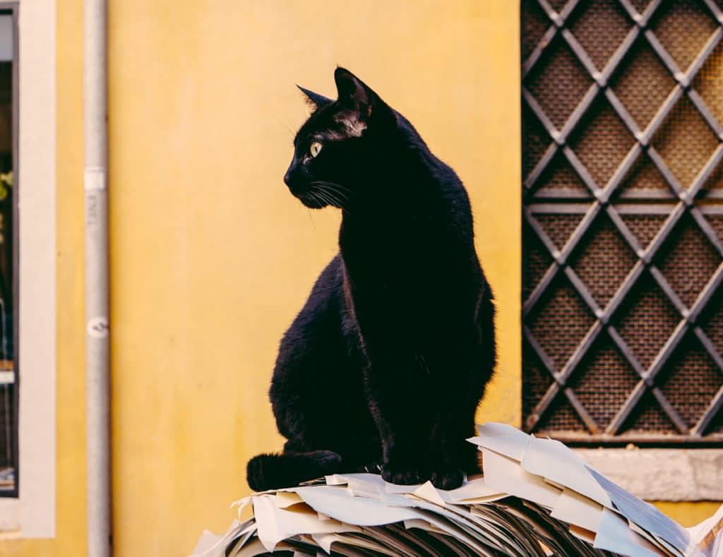 black cat Halloween superstition