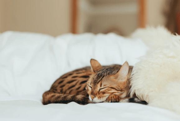 keep cat warm in winter