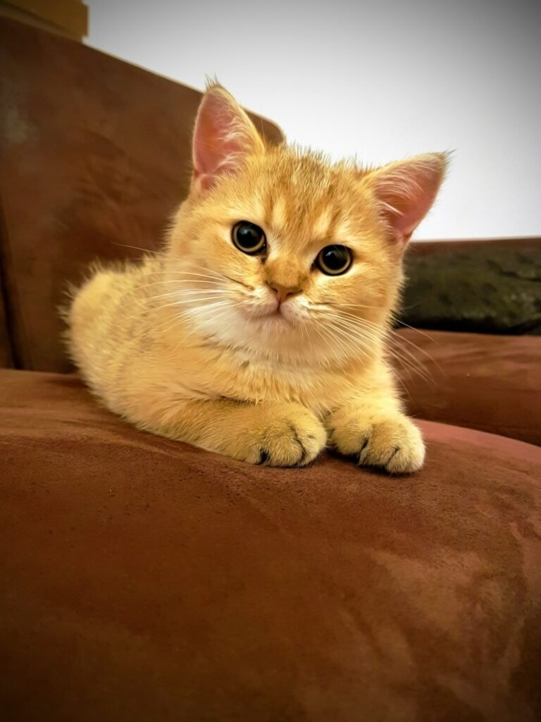 how often should I take my cat to the vet?